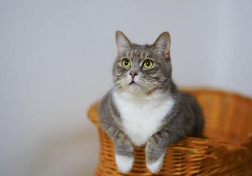 Is salvia giftig voor katten?